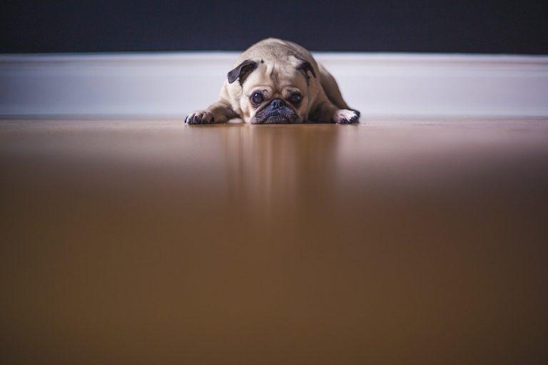 I starší pes potřebuje pohyb