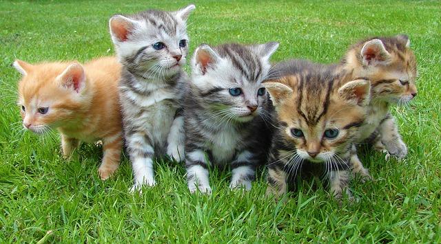 Nejlepší plemena koček pro chov v bytě