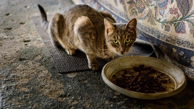 Co jí kočka a jak ji správně krmit?