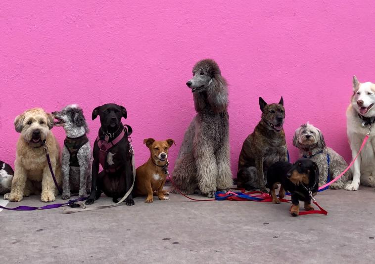 Jak vybrat plemeno psa?